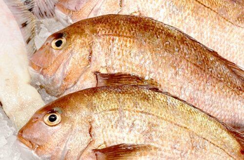 保存版!魚種別ベストな調理法一覧